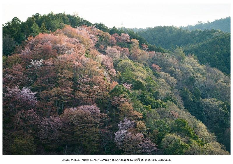 奈良の絶景風景・吉野山の桜見頃満開(下千本・中千本・上千本)旅行記画像17.jpg