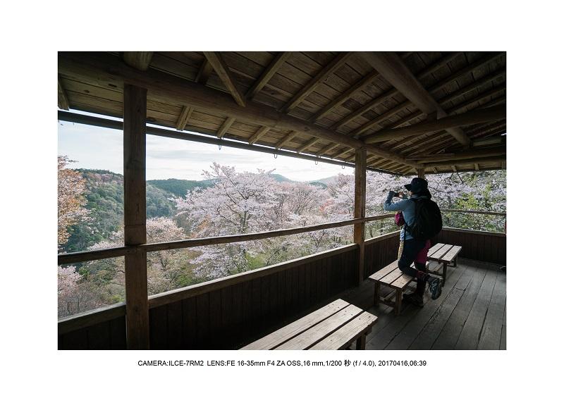 奈良の絶景風景・吉野山の桜見頃満開(下千本・中千本・上千本)旅行記画像20.jpg