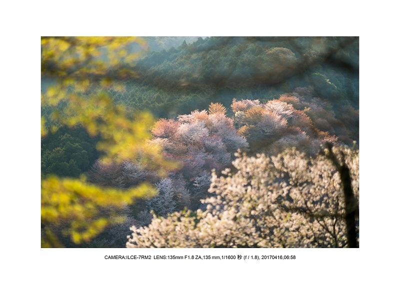奈良の絶景風景・吉野山の桜見頃満開(下千本・中千本・上千本)旅行記画像27.jpg