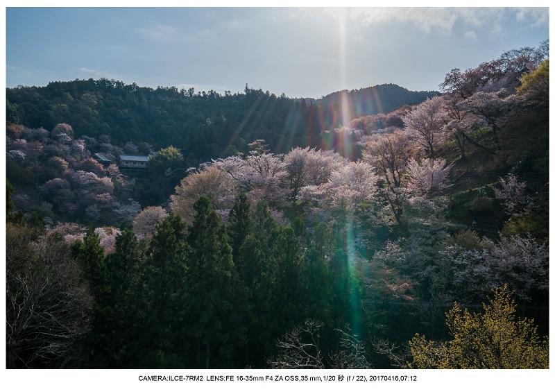 奈良の絶景風景・吉野山の桜見頃満開(下千本・中千本・上千本)旅行記画像33.jpg