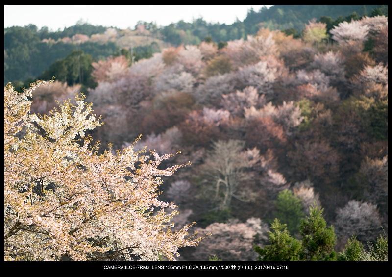奈良の絶景風景・吉野山の桜見頃満開(下千本・中千本・上千本)旅行記画像39.jpg