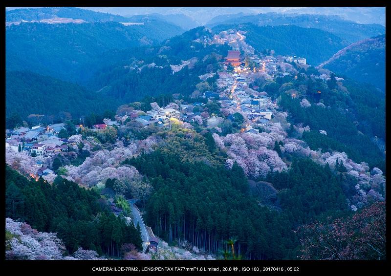 奈良の絶景風景・吉野山の桜見頃満開(下千本・中千本・上千本)旅行記画像4.jpg