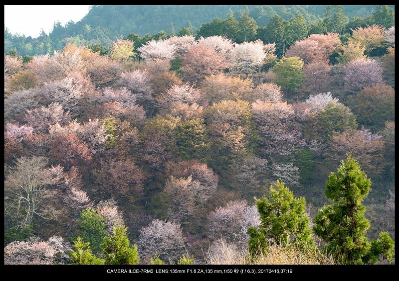 奈良の絶景風景・吉野山の桜見頃満開(下千本・中千本・上千本)旅行記画像40.jpg