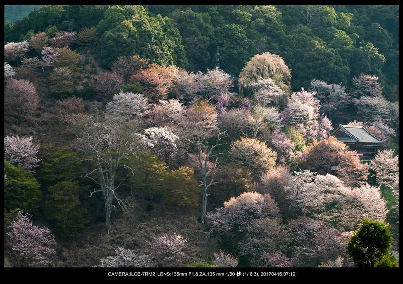 奈良の絶景風景・吉野山の桜見頃満開(下千本・中千本・上千本)旅行記画像41.jpg