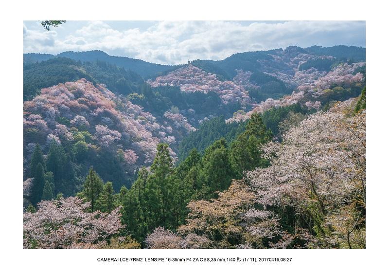 奈良の絶景風景・吉野山の桜見頃満開(下千本・中千本・上千本)旅行記画像44.jpg