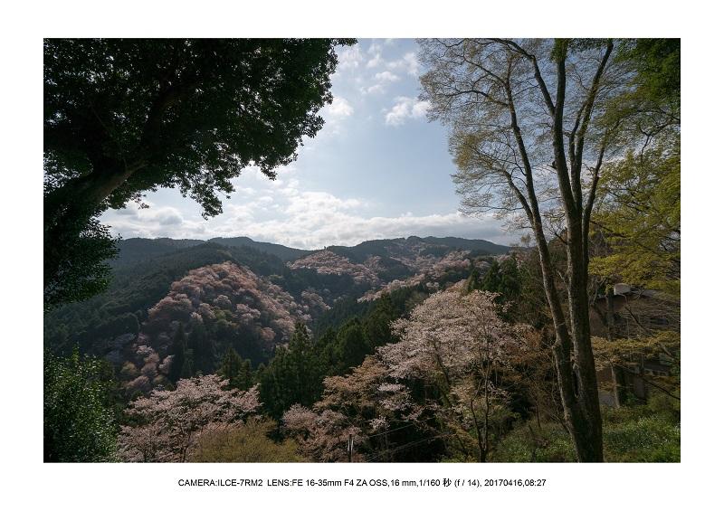 奈良の絶景風景・吉野山の桜見頃満開(下千本・中千本・上千本)旅行記画像45.jpg