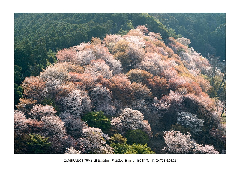 奈良の絶景風景・吉野山の桜見頃満開(下千本・中千本・上千本)旅行記画像46.jpg
