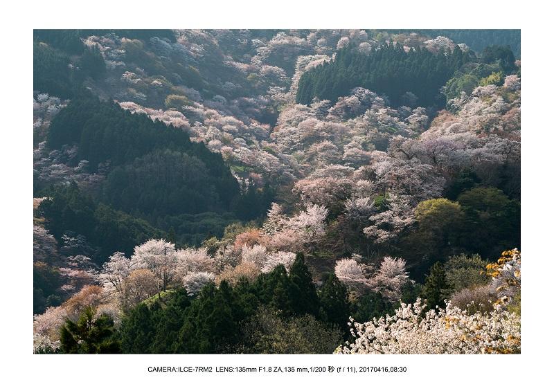 奈良の絶景風景・吉野山の桜見頃満開(下千本・中千本・上千本)旅行記画像48.jpg