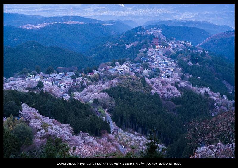 奈良の絶景風景・吉野山の桜見頃満開(下千本・中千本・上千本)旅行記画像5.jpg