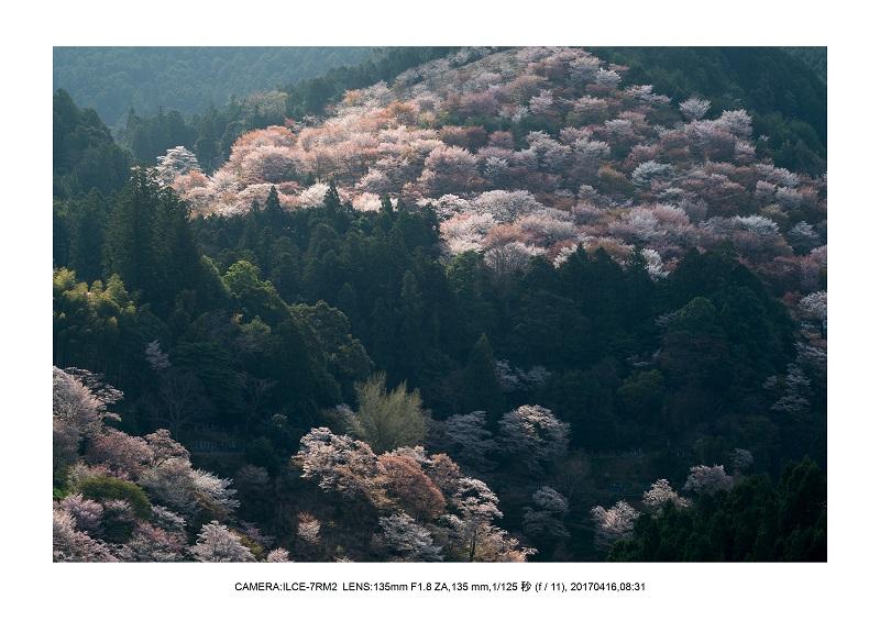 奈良の絶景風景・吉野山の桜見頃満開(下千本・中千本・上千本)旅行記画像50.jpg