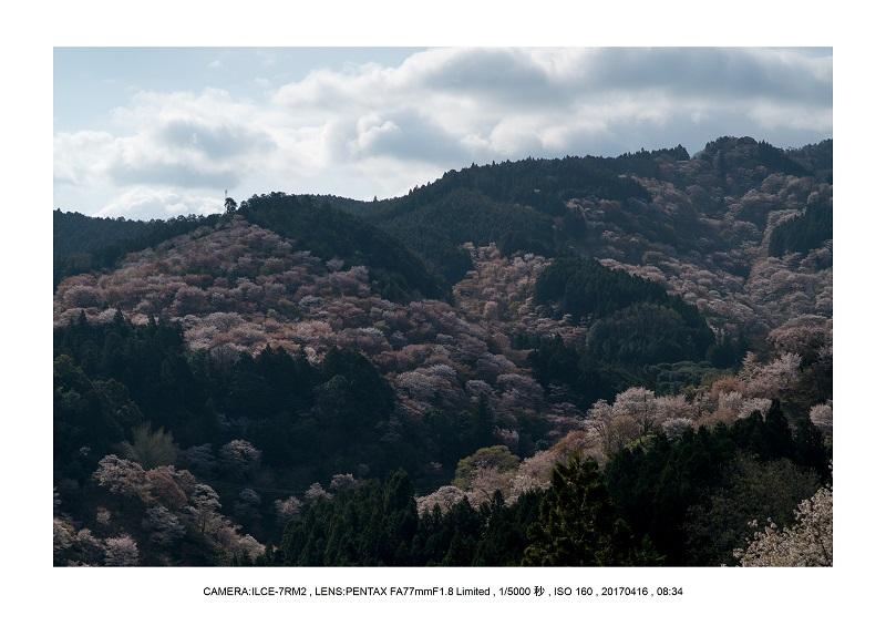 奈良の絶景風景・吉野山の桜見頃満開(下千本・中千本・上千本)旅行記画像53.jpg