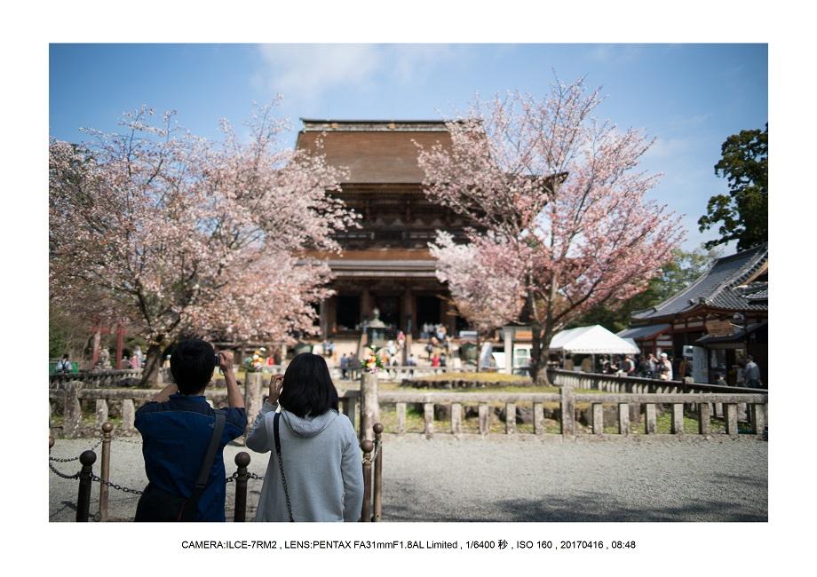 奈良の絶景風景・吉野山の桜見頃満開(下千本・中千本・上千本)旅行記画像60.jpg