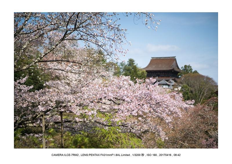奈良の絶景風景・吉野山の桜見頃満開(下千本・中千本・上千本)旅行記画像61.jpg