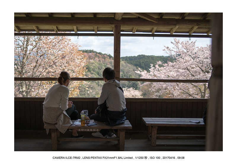 奈良の絶景風景・吉野山の桜見頃満開(下千本・中千本・上千本)旅行記画像71.jpg