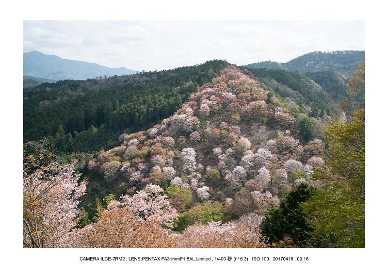 奈良の絶景風景・吉野山の桜見頃満開(下千本・中千本・上千本)旅行記画像72.jpg