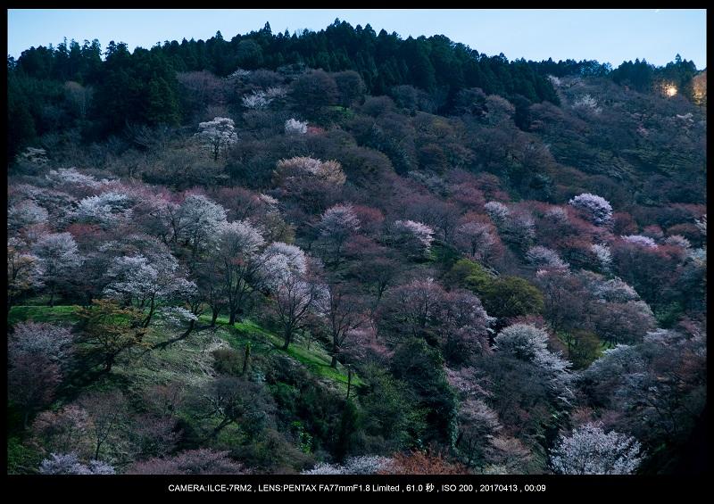 奈良・吉野山の桜さくら見頃満開1.jpg