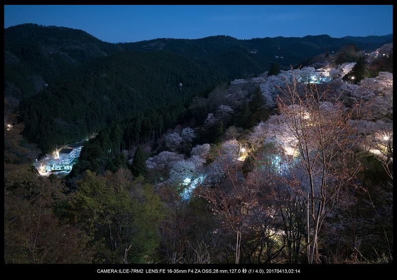 奈良・吉野山の桜さくら見頃満開10.jpg