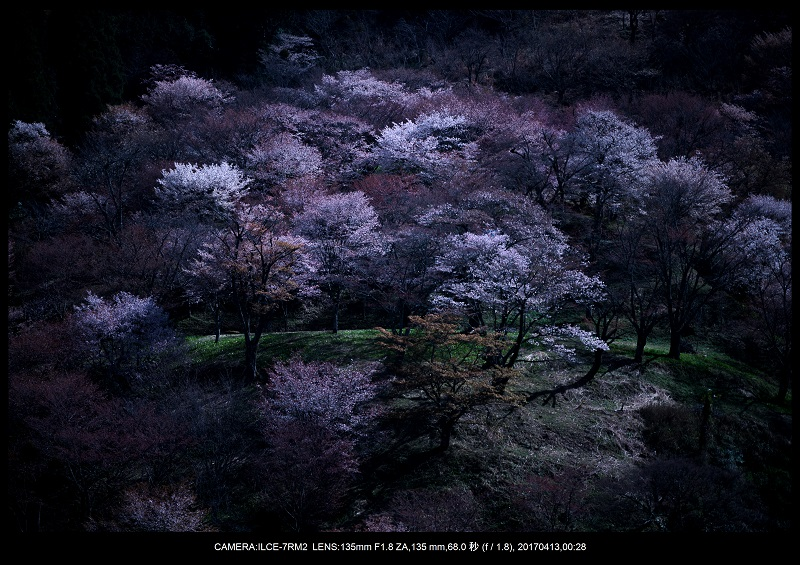 奈良・吉野山の桜さくら見頃満開2.jpg