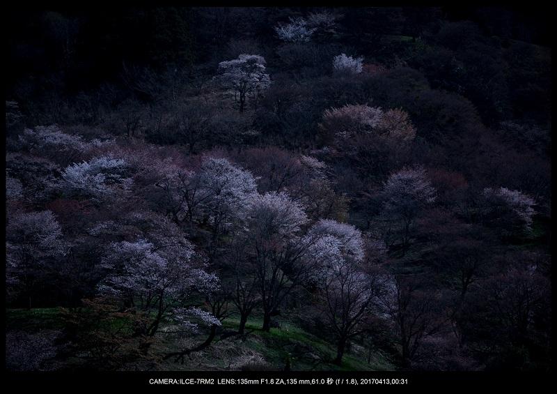 奈良・吉野山の桜さくら見頃満開3.jpg