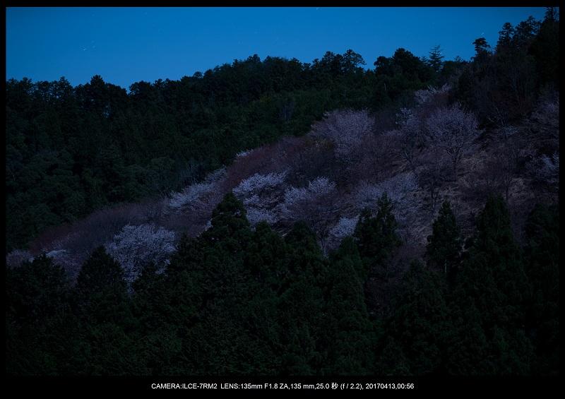 奈良・吉野山の桜さくら見頃満開6.jpg