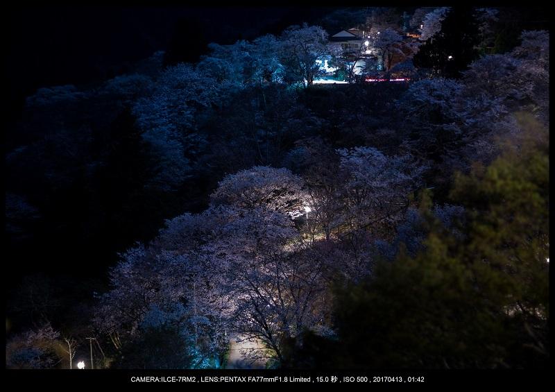 奈良・吉野山の桜さくら見頃満開7.jpg