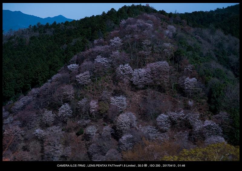 奈良・吉野山の桜さくら見頃満開8.jpg
