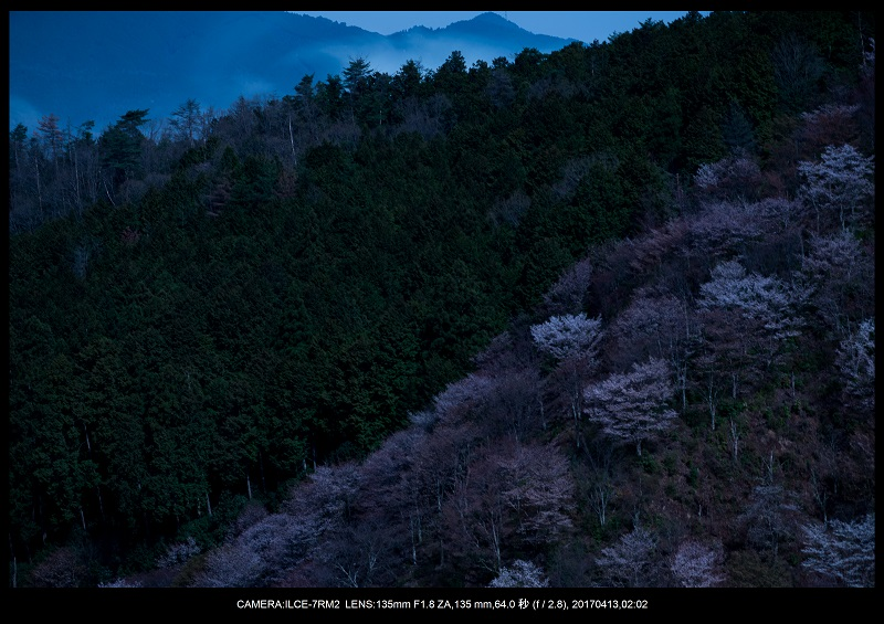 奈良・吉野山の桜さくら見頃満開9.jpg