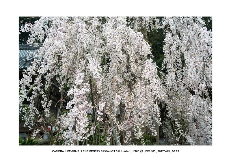 奈良・宇陀の室生湖12.jpg