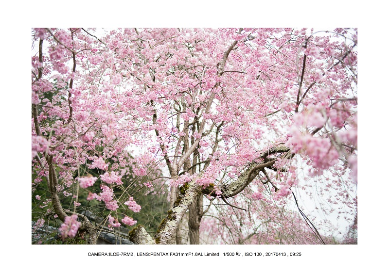 奈良・宇陀の室生湖13.jpg