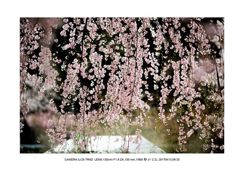 奈良・宇陀の室生湖14.jpg