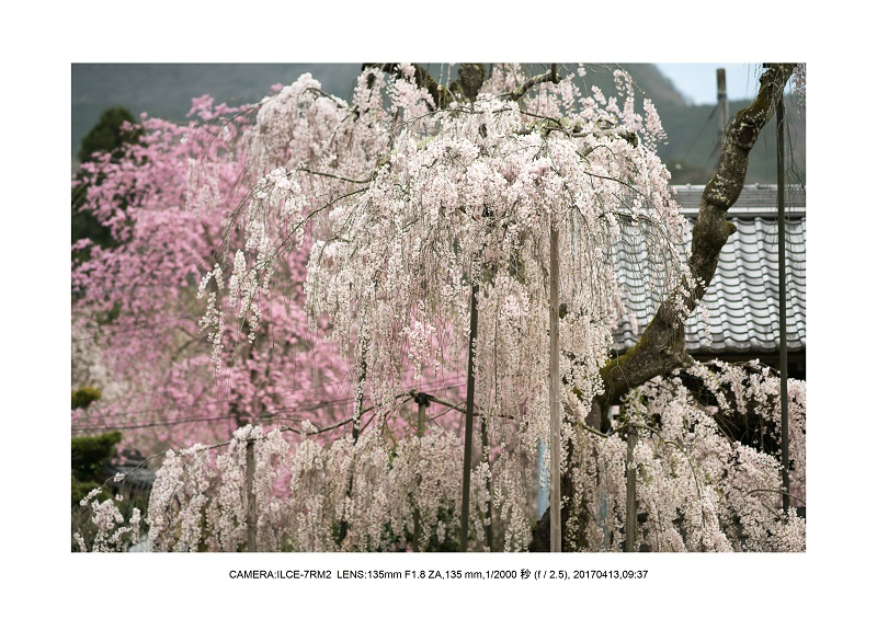 奈良・宇陀の室生湖15.jpg