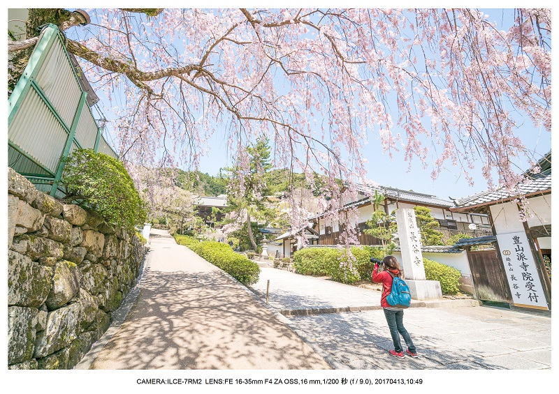 奈良・桜満開の長谷寺な旅行記・画像1.jpg