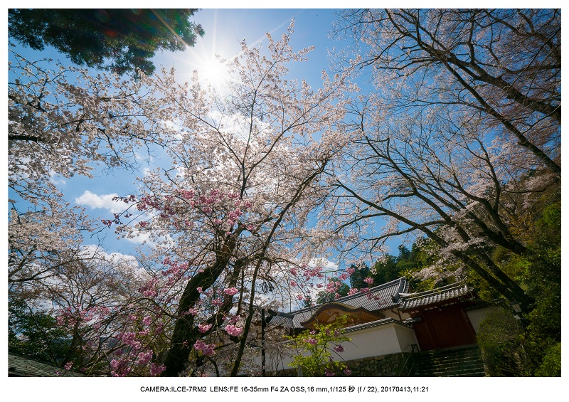 奈良・桜満開の長谷寺な旅行記・画像10.jpg