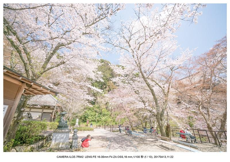 奈良・桜満開の長谷寺な旅行記・画像11.jpg
