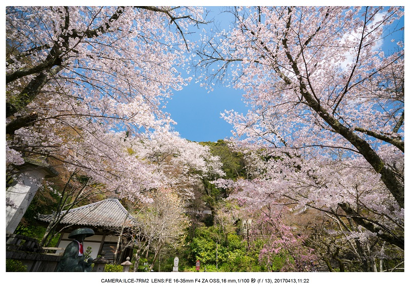 奈良・桜満開の長谷寺な旅行記・画像12.jpg