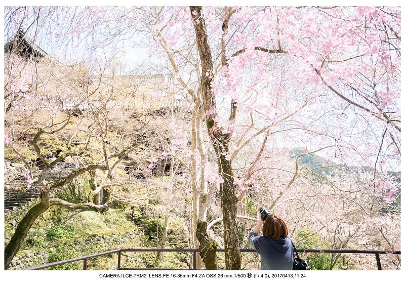 奈良・桜満開の長谷寺な旅行記・画像13.jpg