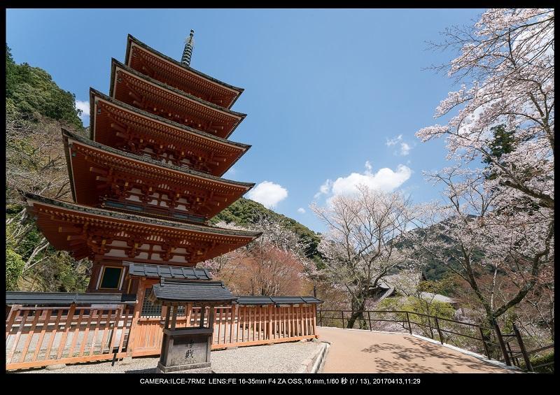 奈良・桜満開の長谷寺な旅行記・画像15.jpg