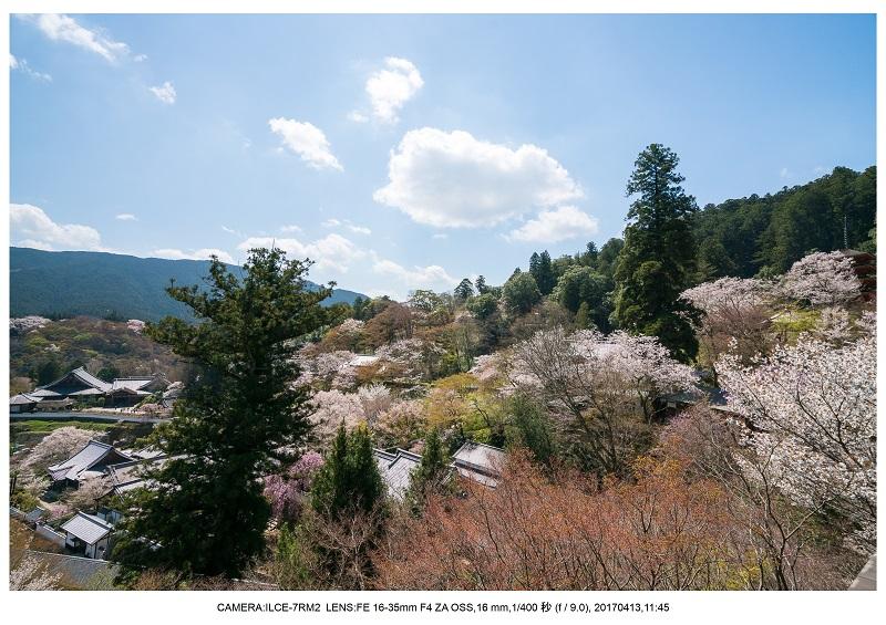 奈良・桜満開の長谷寺な旅行記・画像23.jpg