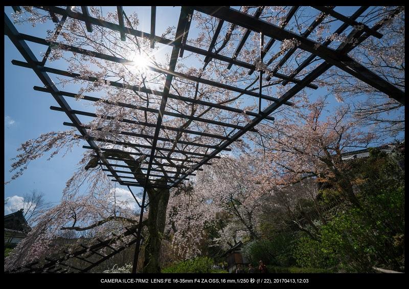 奈良・桜満開の長谷寺な旅行記・画像28.jpg