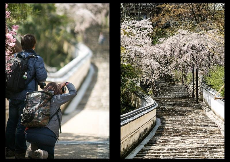 奈良・桜満開の長谷寺な旅行記・画像6.jpg