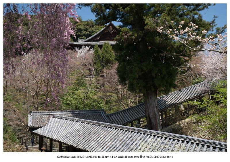 奈良・桜満開の長谷寺な旅行記・画像8.jpg