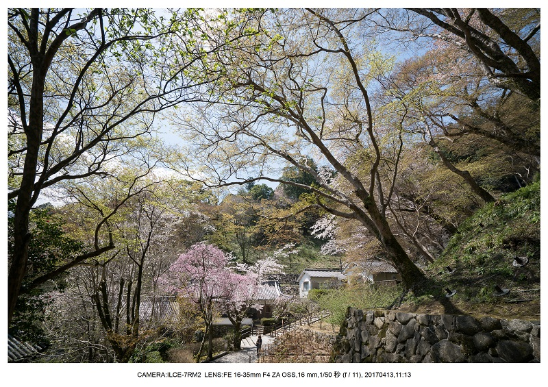 奈良・桜満開の長谷寺な旅行記・画像9.jpg