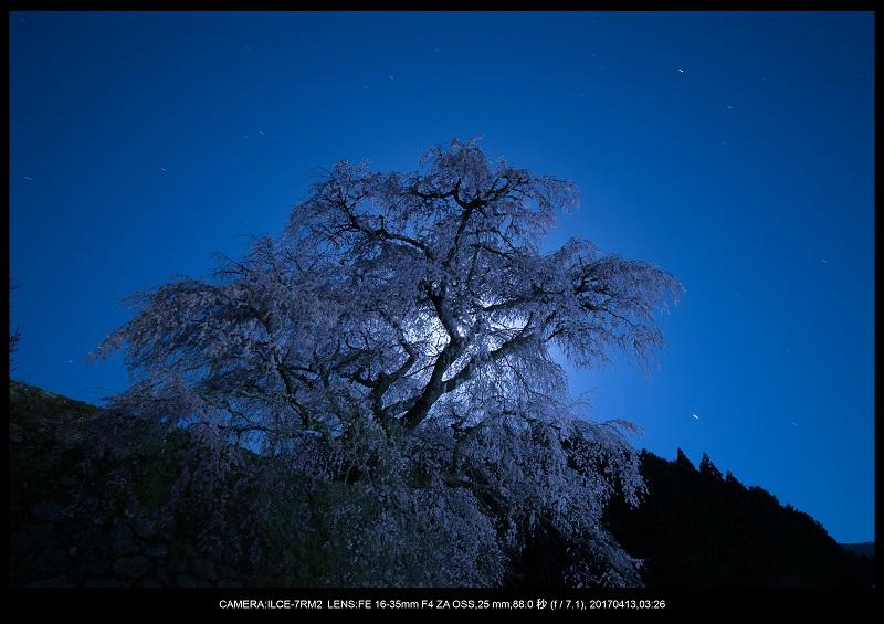 奈良宇陀市・又兵衛桜(本郷の瀧桜)夜景・星景2.jpg