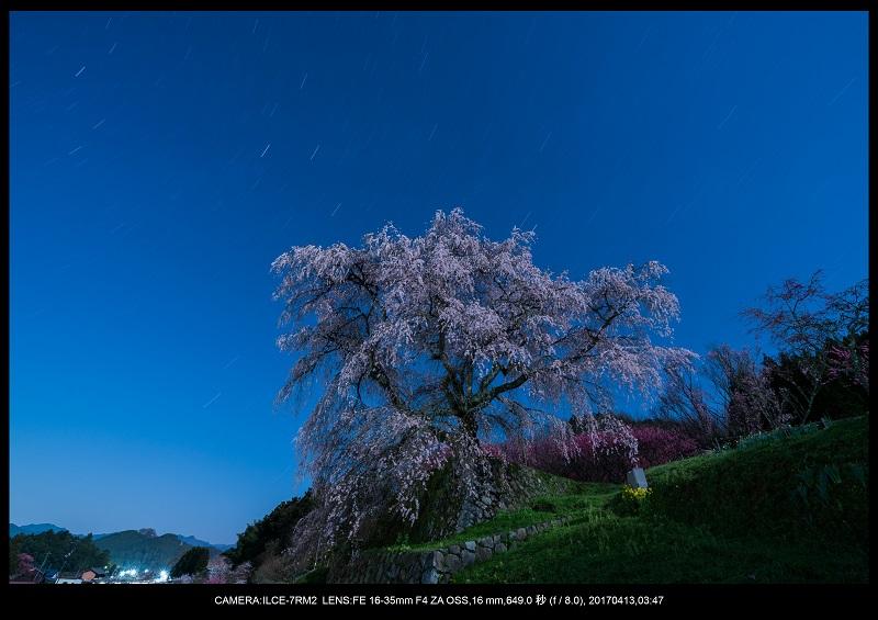 奈良宇陀市・又兵衛桜(本郷の瀧桜)夜景・星景6.jpg