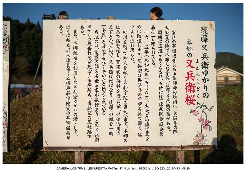 奈良宇陀市・又兵衛桜(本郷の瀧桜)朝景11.jpg
