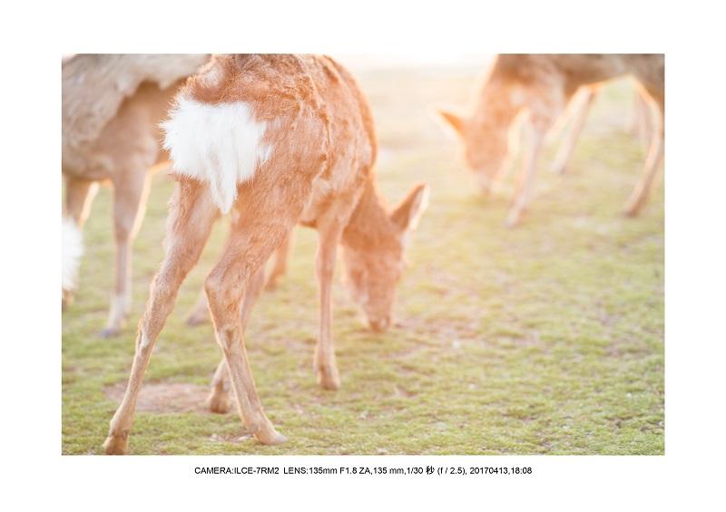 奈良絶景・若草山で鹿のシルエットと夕日夕陽15.jpg