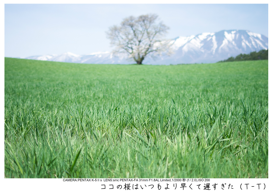 小岩井農場の一本桜0.jpg