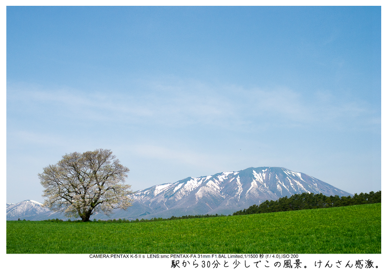小岩井農場の一本桜1.jpg