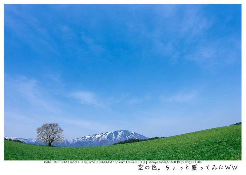 小岩井農場の一本桜11.jpg