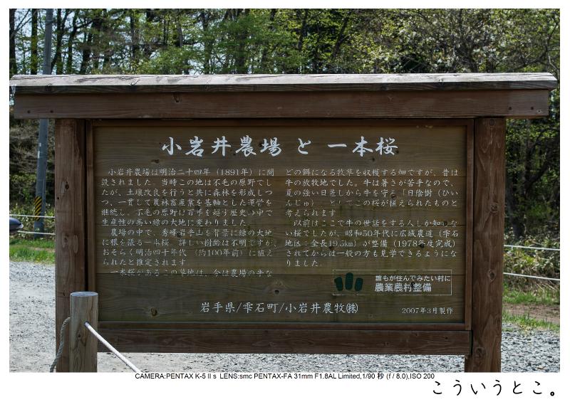 小岩井農場の一本桜2.jpg